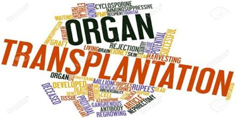 Research paper thesis help organ donation - pennarbdbzh